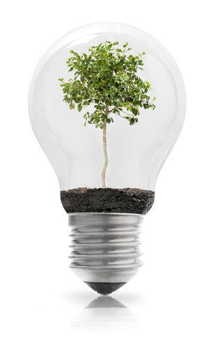 Green-tree-lightbulb